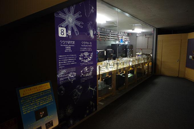 くらげ研究室