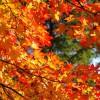 10月 北海道の服装を提案 観光で紅葉を見るなら